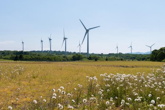 郡山布引高原のたんぽぽと風車